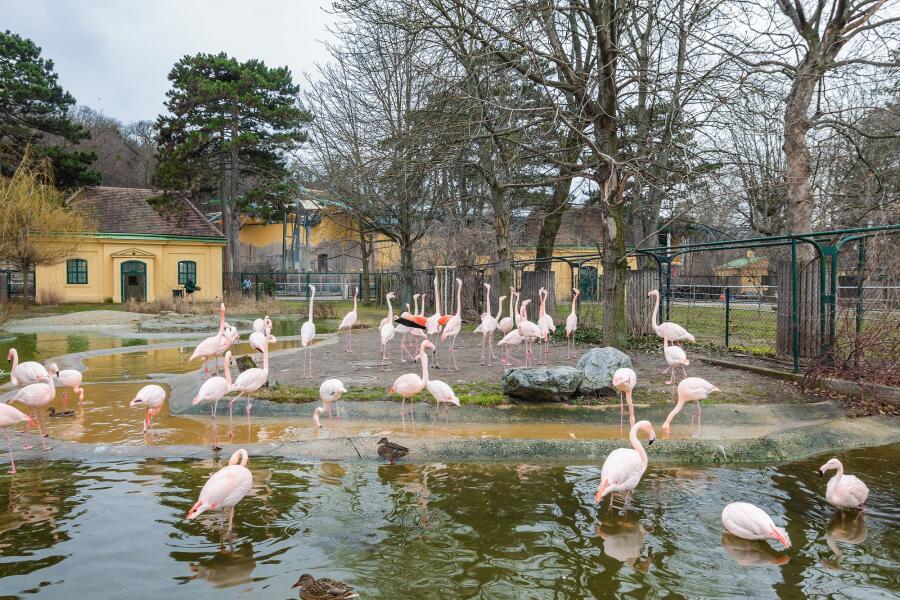 Фламинго в зоопарке Вены