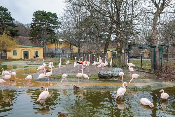 Где посмотреть на животных в Вене?