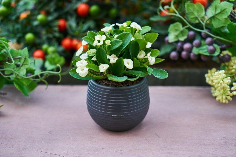 Растения повышают процент кислорода в воздухе