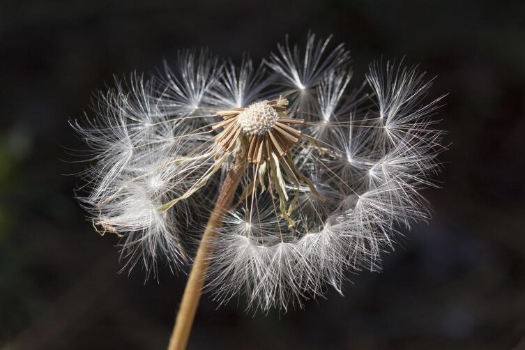 Выбирайте для прогулок влажные дни, когда аллерген не витает в воздухе