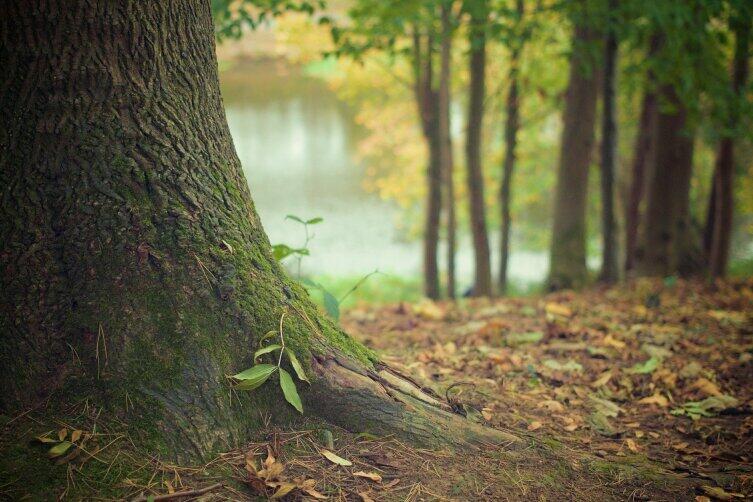 В лесу каждая соринка - витаминка...