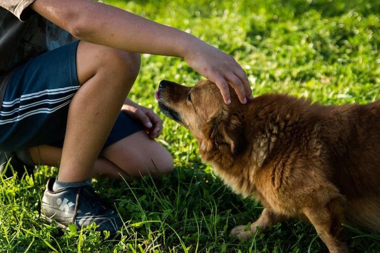Какие поверья связаны с животными?