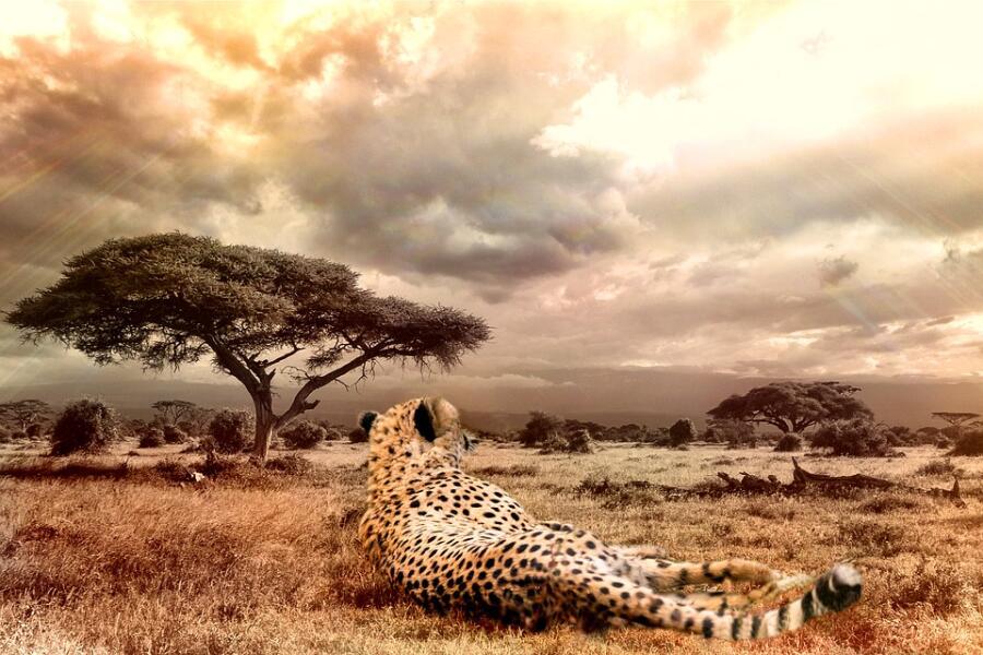 Какие хищники Африки — самые успешные охотники?
