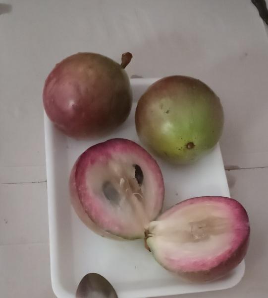 Звездчатое яблоко