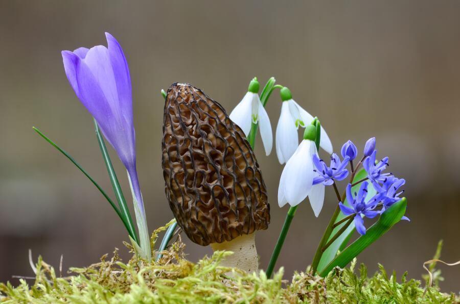 Как собрать грибы в апреле?