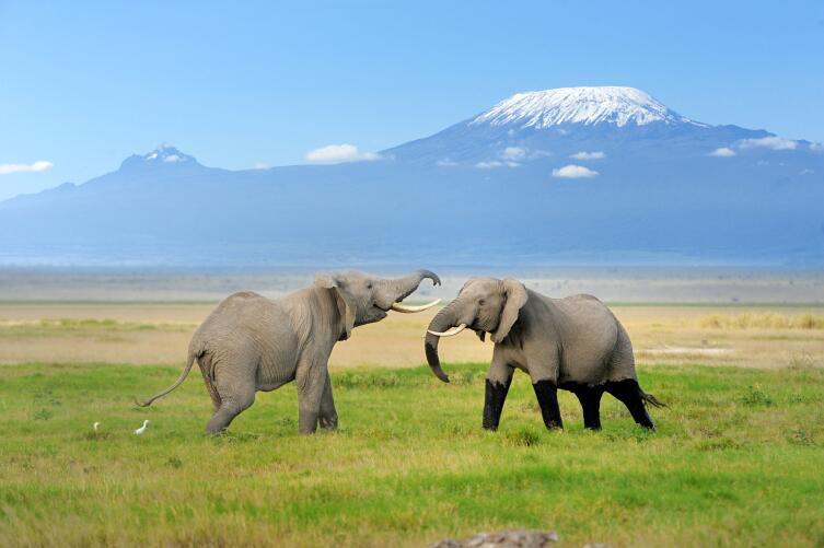 Вдали гора Килиманджаро