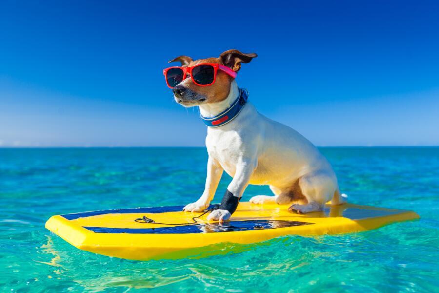 Какие существуют мифы о маленьких породах собак?