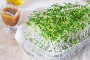 Микрозелень — польза для организма или вред для кошелька?