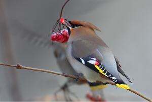 Чем прикормить птиц? Любимая еда пернатых