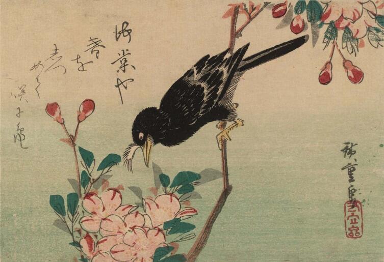 Утагава Хиросигэ, «Хохлатый черный дрозд и цветущая вишня. Серия