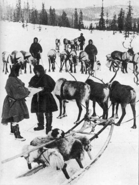 Бойцы-оленеводы Карельского фронта у олених упряжек