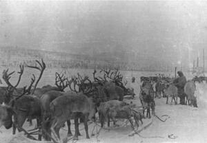 Какую роль сыграли оленно-транспортные батальоны в Великой Отечественной войне?