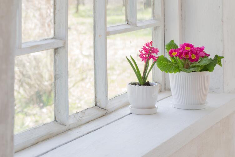 Как оригинально оформить подоконник, используя горшечные растения?
