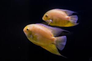 Как дышать под водой? Способы получения кислорода живыми существами