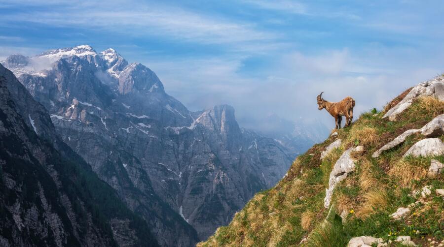 Как животные и растения приспосабливаются к жизни в горах?