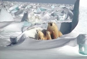 Что происходит на островах в Северном Ледовитом океане?