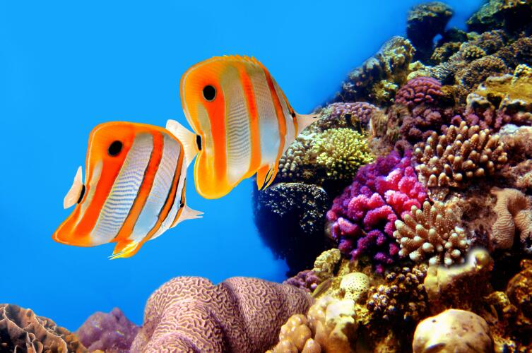 Обитатели кораллового рифа