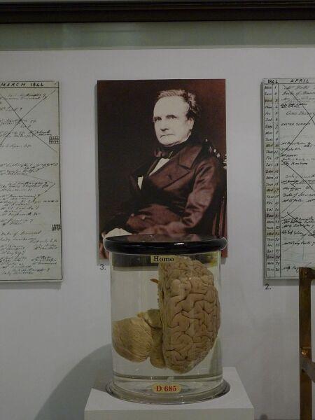 Мозг Чарльза Бэббиджа в музее науки в Лондоне