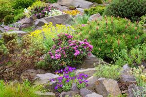 Что такое альпинарий? Уголок дикой природы в саду