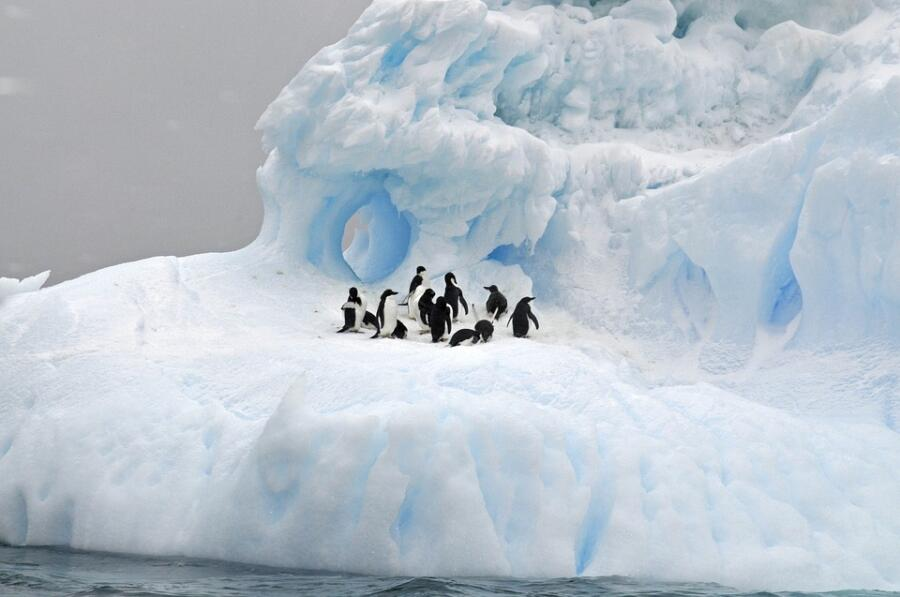 Кто живёт на южном полюсе? Фауна и флора Антарктики