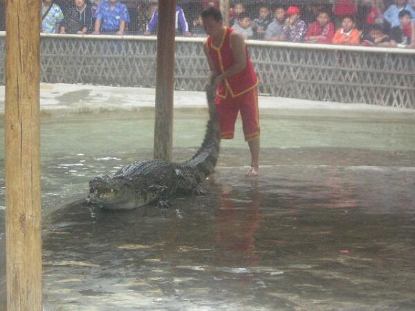 Ленивый крокодил