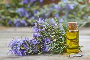 Чем полезно масло розмарина?