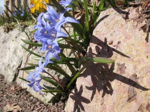 Что такое скальная цветочная стенка?