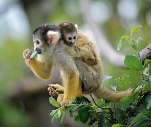Как родители заботятся о детях в дикой природе? Феномен семьи