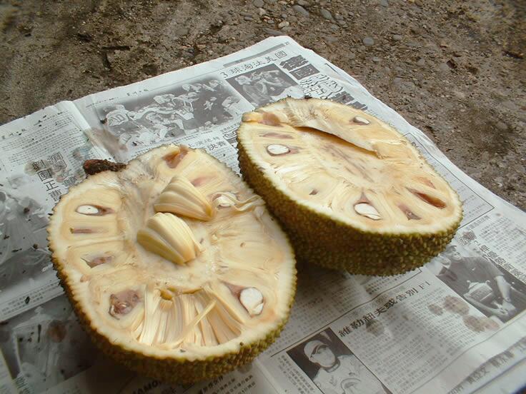 Плод джекфрута в разрезе