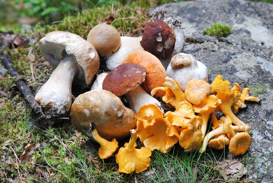 Какие проблемы со здоровьем помогут решить грибы?