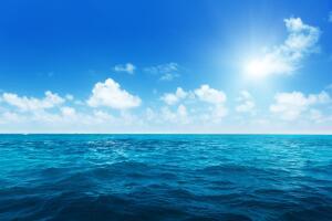 Кто живет и что растет на поверхности океана?