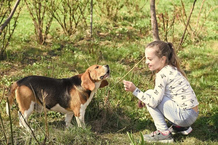 Почему нужно дрессировать собаку?