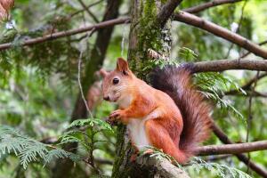 Как животные выживают зимой в северных районах? Фауна хвойных лесов