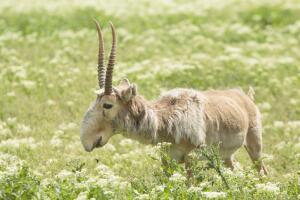 В мире животных. Какие газели обзавелись большими носами, а какие научились стоять на двух ногах?