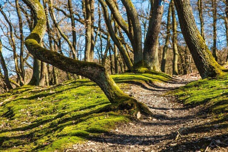 Часто мох покрывает дерево полностью