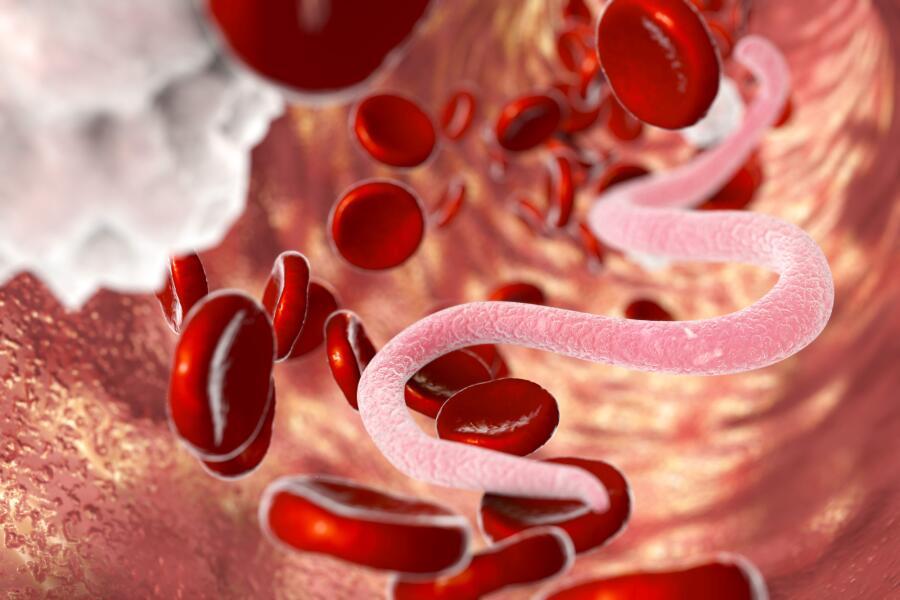 Паразит в крови