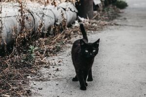Как перестать верить в приметы и суеверия?
