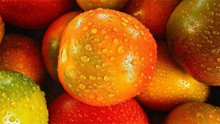 Особенность западного метода в том, что овощи выращивают в теплицах по гидропонной системе