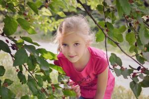 Чем полезны ягоды шелковицы?