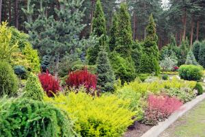 Какой формы бывают хвойные растения?