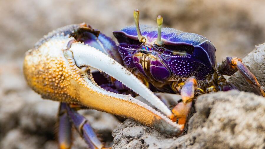 Как устроена жизнь на морских берегах? Прибрежные растения и животные