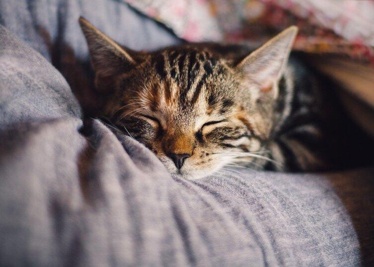 Если вы нуждаетесь в дневном сне, не нужно этого стесняться