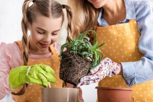 Какие растения помогут сделать карьеру и повысить трудоспособность?