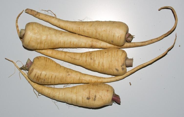 Пастернак напоминает белую морковь