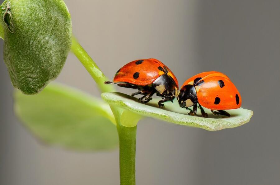 Допустимо ли бояться насекомых?