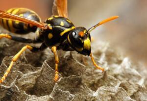 Почему и когда люди начали бояться насекомых?