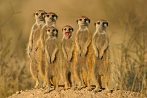 Для чего животные объединяются в массовые группы? Стратегии выживания