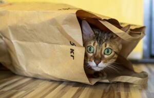 Какие кошки любят купаться?