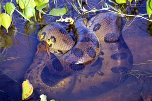 Чем интересен животный мир бассейна Амазонки?