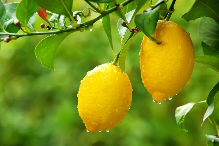 Кто и когда придумал лимонад?